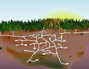 Harvester Ants Ant Tunnel Underground...