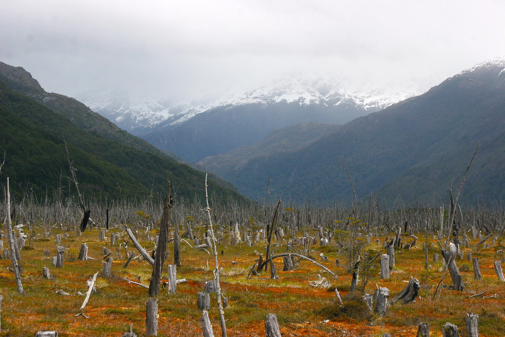 PATAGONIA, CHILE: signs of deforestation | Landscape seen ...