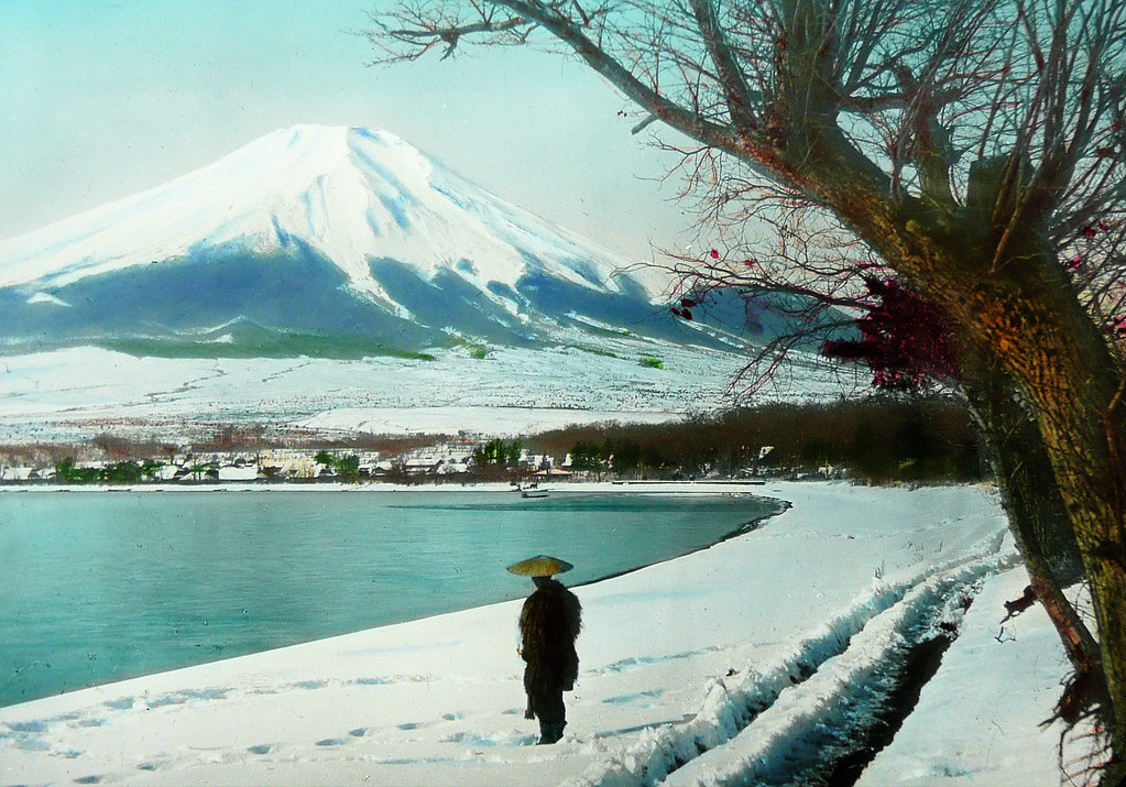 mt  fuji  tree  man and snow