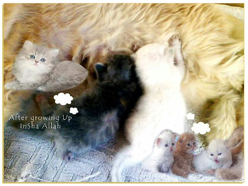 Newly Born Kittens For Sale New Born Kittens For Sale