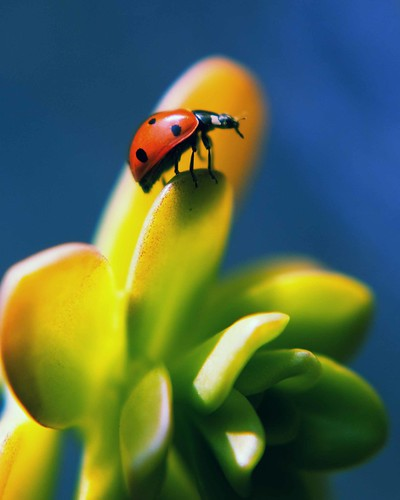 ladybug ladybug fly away home | by roxi04