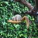 Squirrel in bird house