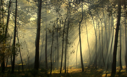 That light that changes the forest | by Teresa Teixeira