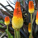 Bright flowers at Kew