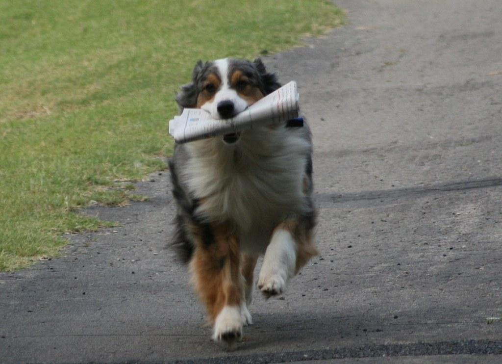 Dog Refusing Food