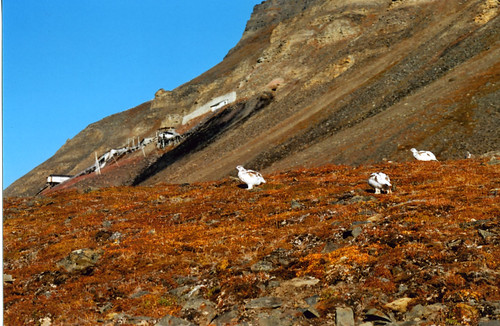Ptarmigan panorama | by The Student Cook