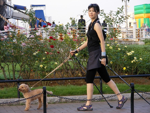 Image Result For Dog Walking Training