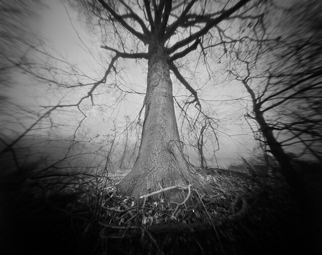 Integrity of light tree in the fog closeup a 4x5 film pinhole photograph by integrity of light