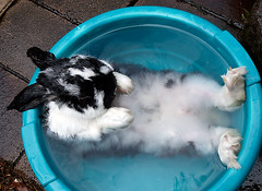 bunny bath | by Steve Daggar