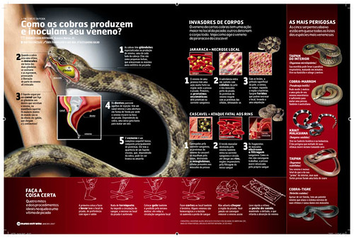 Snake attack design art direction alessandra kalko text for Design attack