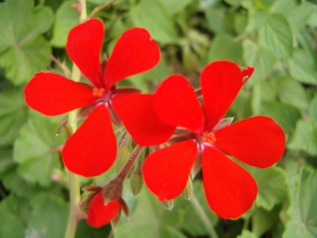 Estas Flores Tan Sencillas Pero Tan Bonitas Y Su Color Ta Flickr