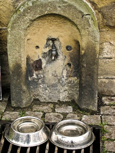 Doggie watering hole