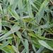 * Grass Texture *