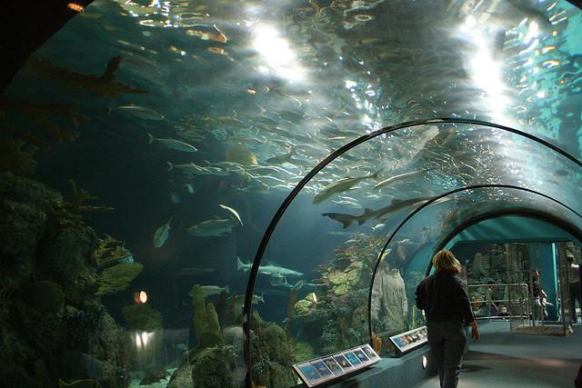 Aquarium At Moody Gardens Galveston Texas