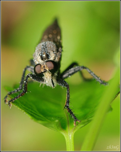 Tampines Eco Green Night Macro 100511 06 | by zh3nG 正