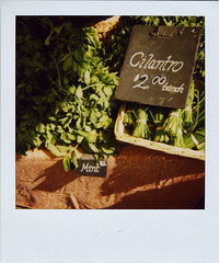 may17: cilantro | by bugheart
