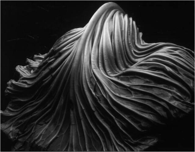 Essay, Research Paper: Edward Weston