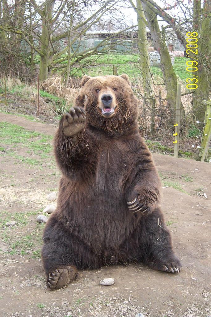2323466896 on Brown Bear