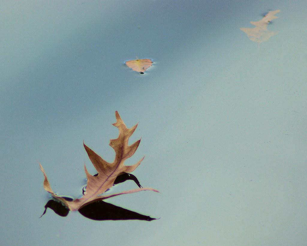 Photo Favorite: Leaves on Lake Bailey, Petit Jean State Park, Arkansas November 17, 2007 (Pentax K10D)