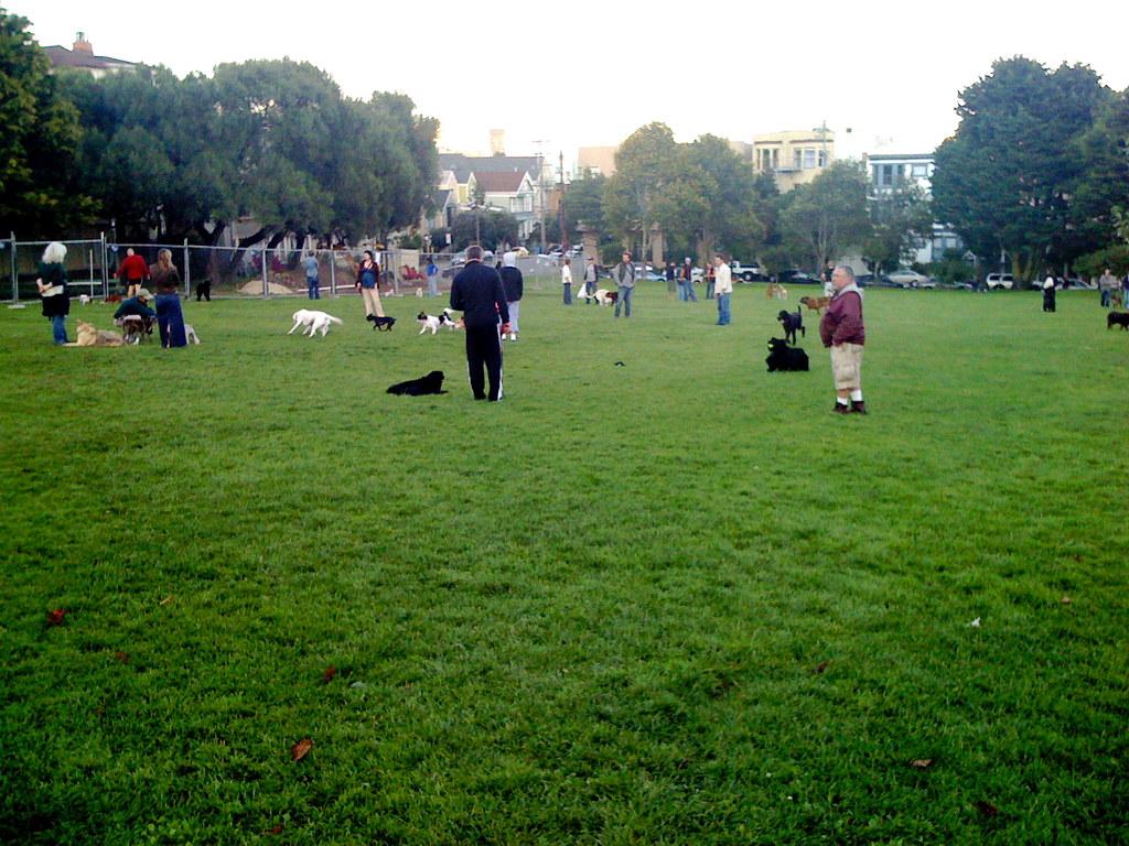 Duboce Park Dog Play Area