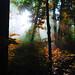 Sacred Grove (Autumn Action)
