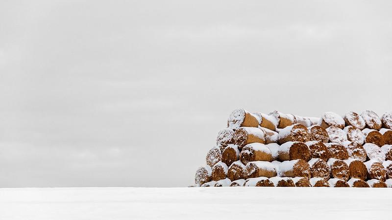 Spring rolls / Jarné rolky