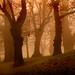 0998 Trees In Mist