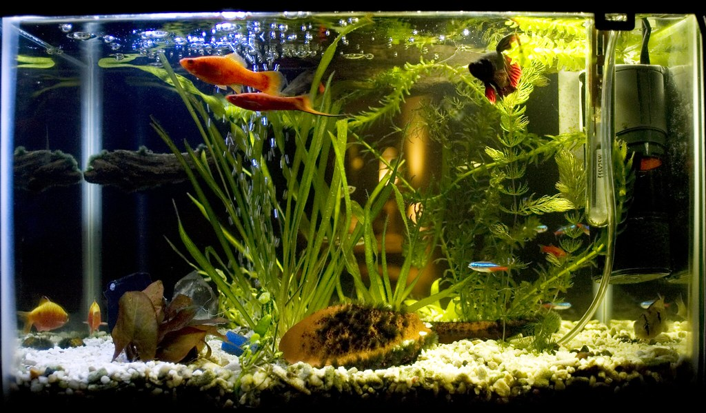 Community Tank Here S Our 5 Gallon Community Tank It