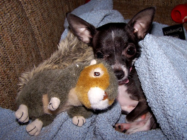 Squeaky Squirrel Dog Toy