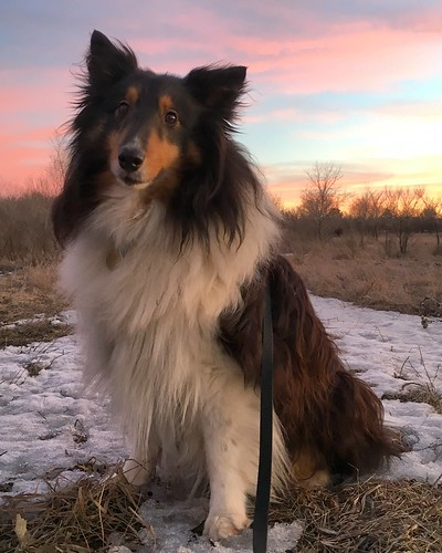 Jasper pauses for a sunset