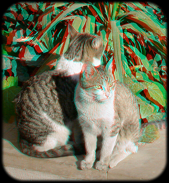 You Need Red/Cyan Glasses: Cats Anaglyph 3D اناگلیف
