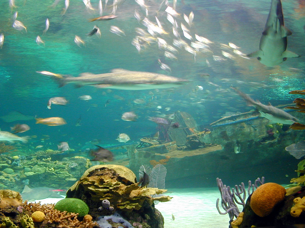 Ripley 39 S Aquarium Of The Smokies Sharks Fish And Ship