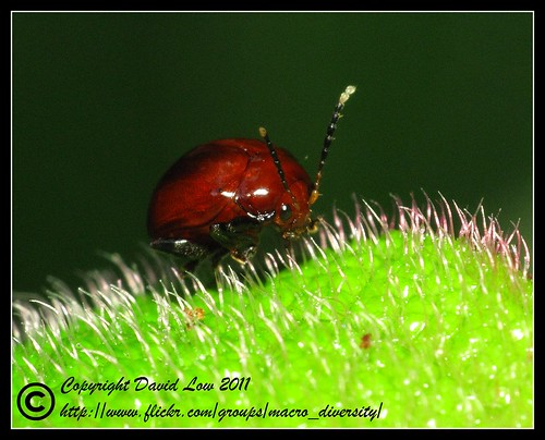 Beetle | by Davlyn Photography ®