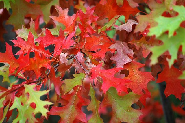 Rezultat iskanja slik za leaves in the fall