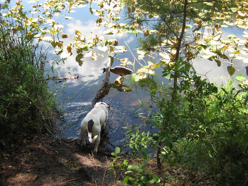 Dog drinking from lake ray jacksonville arboretum gard - Jacksonville arboretum gardens ...
