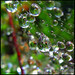rain drops keep falling on my web...
