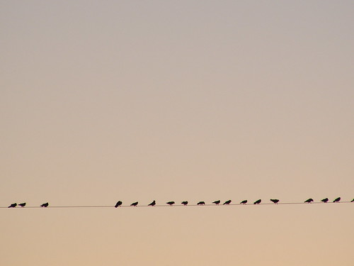 birds on a wire | by touterse