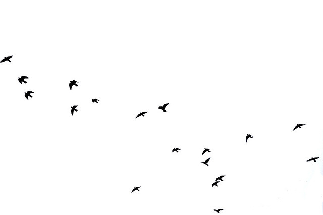 birds flying high, you know how i feel | Day 18 of Art ... - photo#12