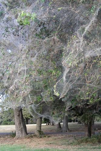 giant spiderweb texas