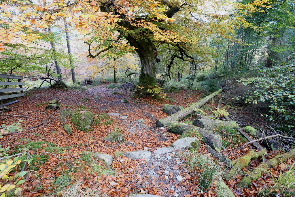 Autumn woods, Stank Glen