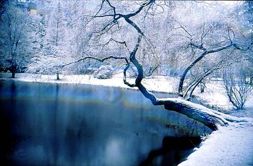 Pond at winter teich im winter you can see the silence for Teich im winter