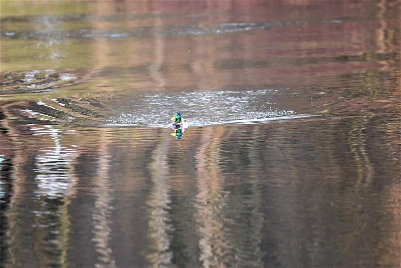 Ducks 26.02 (3)
