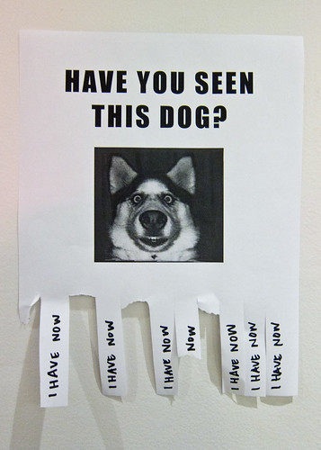 Have You Seen This Dog? | by Scott Beale