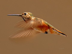 ~~ Hummer ~~ | by Paparb