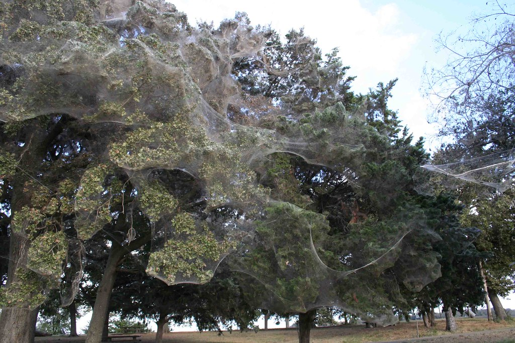 Giant spider web in texas park