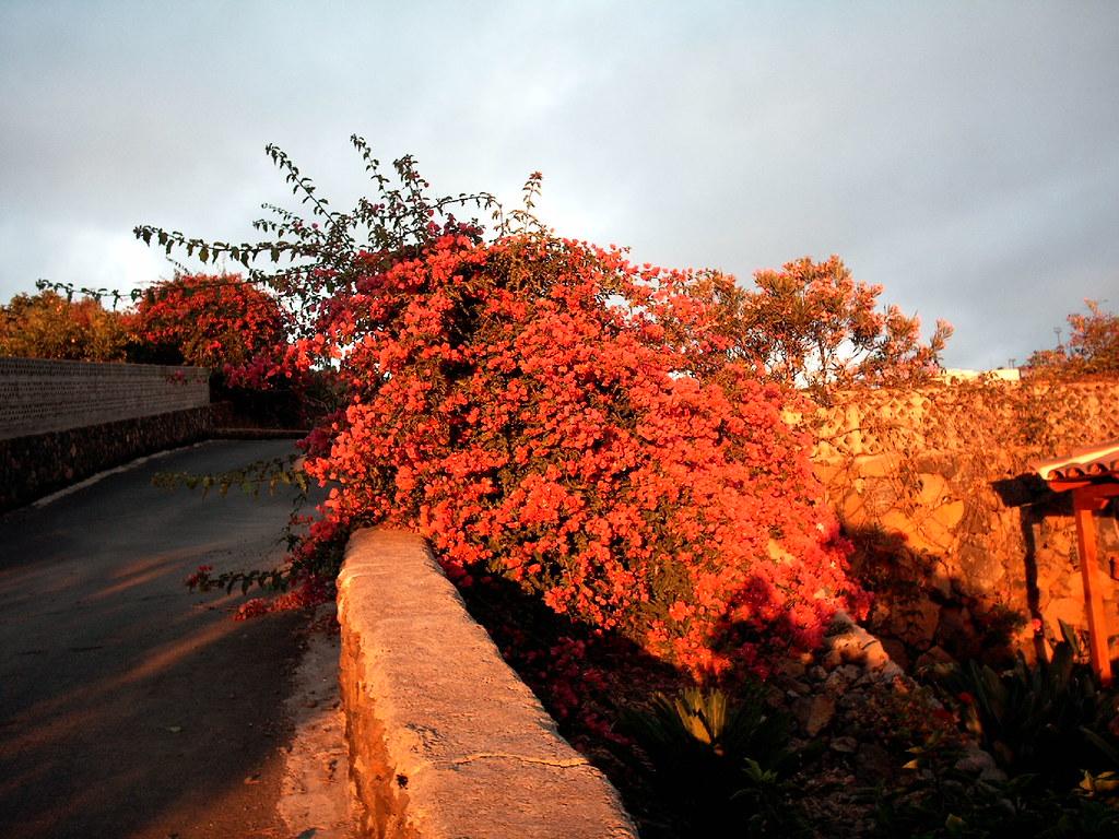 lapalma stimmung busch der busch mit roten bl ten. Black Bedroom Furniture Sets. Home Design Ideas