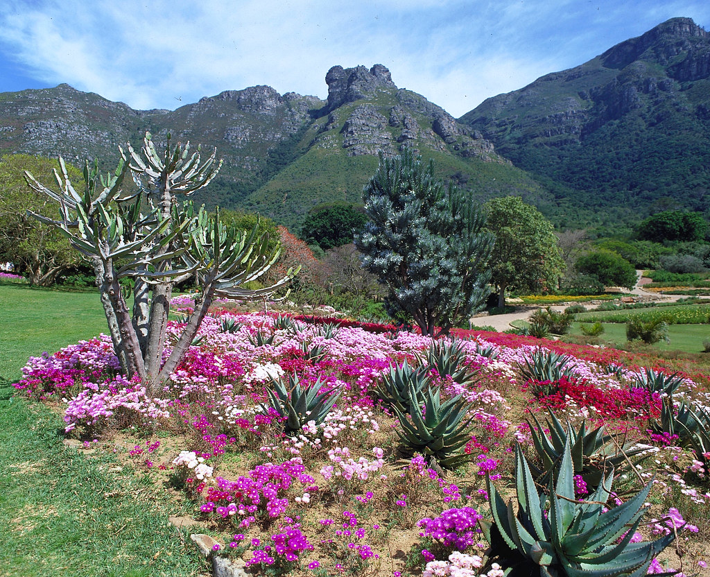 Kirstenbosch Gardens South Africa Kirstenbosch National Flickr
