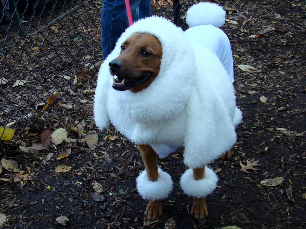 wear-clothe-to-keep-your-dog-warm