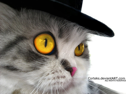 A cat in a Hat | by Co®tex™