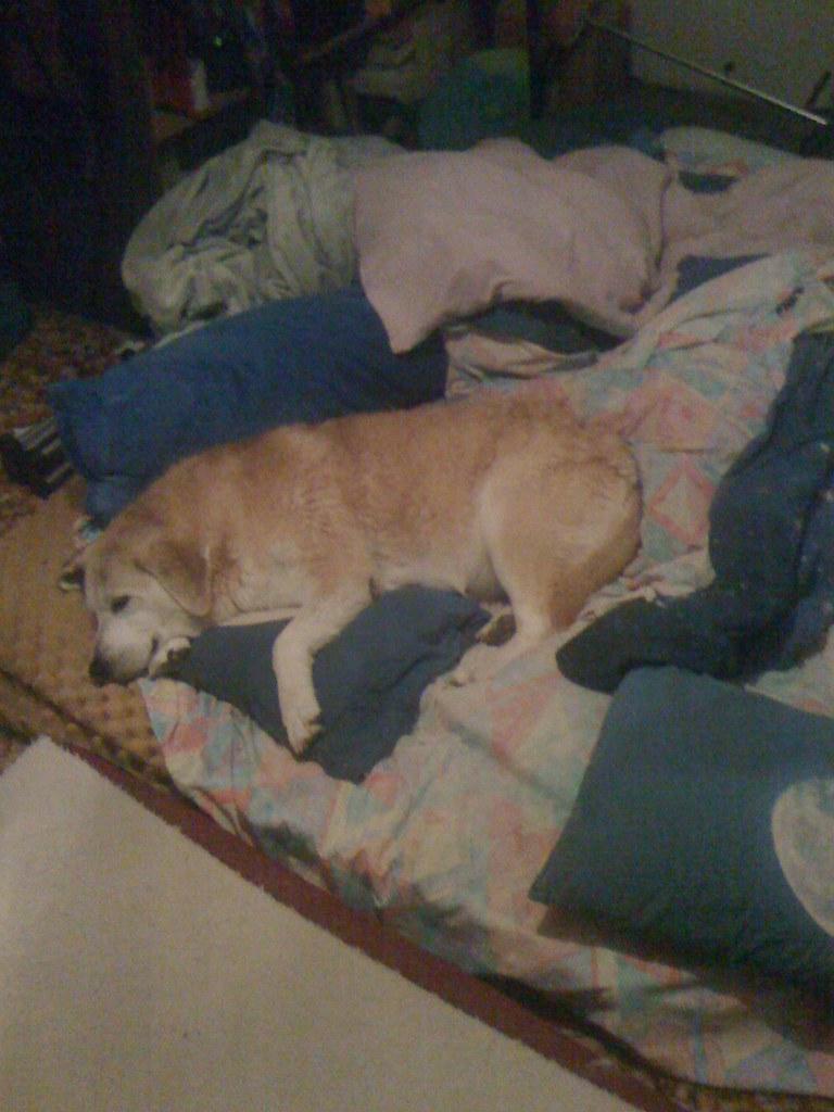 Dog Sleeps On Floor Not Bed